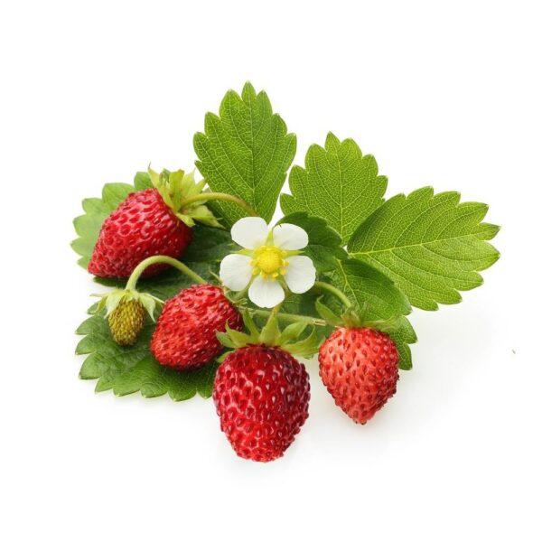 FLV Alpine Strawberry - Steam E-Juice   The Steamery
