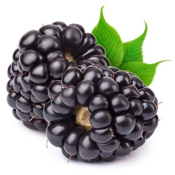 TFA Blackberry - Steam E-Juice   The Steamery